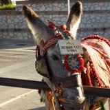 Mijas-Donkey taxi Royalty Free Stock Images