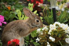 Mijn begonia's oh! Stock Afbeelding