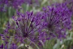 Mijn bloemtuin royalty-vrije stock foto's