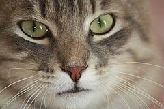 Mijn favoriet dier, de kat royalty-vrije stock foto's
