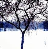 Mijn favoriet weinig boom Stock Foto