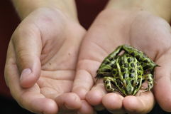 Mijn froggy vriend Royalty-vrije Stock Foto's