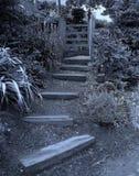 Mijn geheime tuin stock foto's