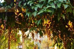 Mijn geheime tuin stock foto