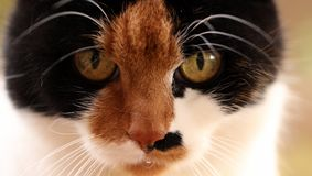 Mijn gelukkige kat is lek royalty-vrije stock afbeelding