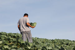 Mijn groente Stock Afbeelding