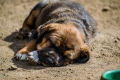 Mijn hond 016 royalty-vrije stock foto