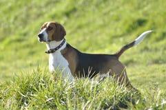 Mijn hond royalty-vrije stock fotografie