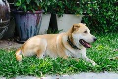 Mijn hond Stock Foto