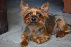 Mijn hond Stock Fotografie