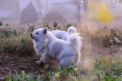 Mijn hond is geen huisdier Mijn hond is mijn familie stock fotografie