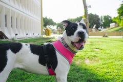 Mijn hond Lala is gelukkig en ik houd van het royalty-vrije stock fotografie
