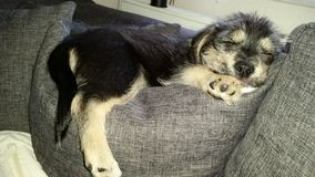 Mijn Hond luna, Mein Hund Stock Foto's