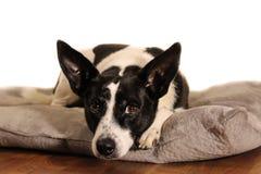 Mijn hond` s portret royalty-vrije stock foto's