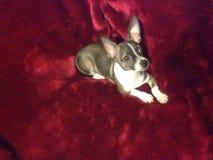 Mijn honddrama Stock Foto's