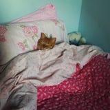 Mijn Italiaanse kat Stock Foto's