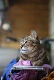 Mijn kat Stock Foto's