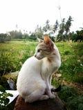 Mijn kat stock fotografie
