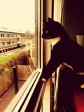 Mijn kat Stock Afbeelding