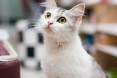 Mijn kat Royalty-vrije Stock Afbeelding