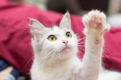 Mijn kat Royalty-vrije Stock Foto