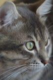 Mijn kat Arthur Royalty-vrije Stock Afbeelding