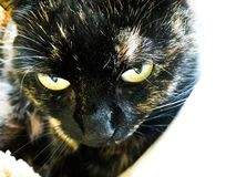 Mijn kat die leuk kijken stock fotografie