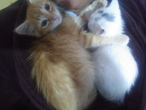 Mijn katten royalty-vrije stock afbeeldingen