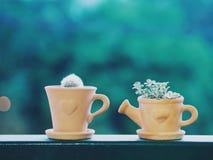 Mijn kleine cactus Royalty-vrije Stock Fotografie