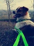 Mijn kleine hond Royalty-vrije Stock Fotografie