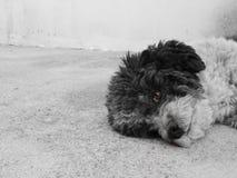 Mijn kleine hond Knappe jongen royalty-vrije stock foto