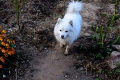 Mijn kleine leuke hond stock foto's