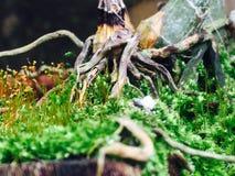 Mijn kleine tuin royalty-vrije stock afbeelding