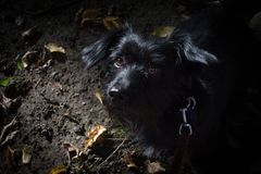 Mijn Maximum hond Royalty-vrije Stock Foto's