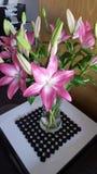 Mijn nieuwe bloemen Royalty-vrije Stock Afbeeldingen