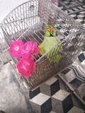 Mijn papegaai stelt binnen royalty-vrije stock foto