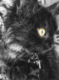 Mijn Perzische zwarte kat is niet goed voor het stellen aan camera Maar ik klik sommige willekeurige beelden, is dit één enkel ik stock foto's