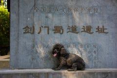 Mijn Poedelhond bij het Overblijfsel van Jianmen-Weg aan Sichuan royalty-vrije stock afbeeldingen