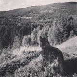 Mijn prachtige hond Royalty-vrije Stock Foto