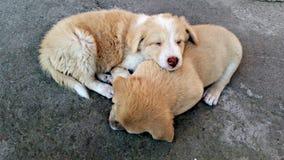Mijn Puppy Stock Fotografie