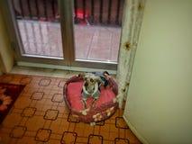 Mijn Puppy Stock Foto