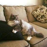 Mijn pussycat stock foto's
