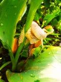 Mijn slak eet mijn bloem royalty-vrije stock afbeeldingen