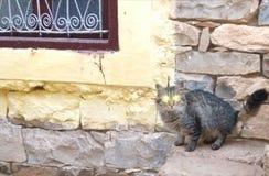 Mijn super kat 🠐 ˆ stock foto