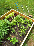 Mijn Tuin 2 Stock Afbeeldingen