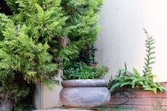 Mijn tuin Royalty-vrije Stock Afbeelding
