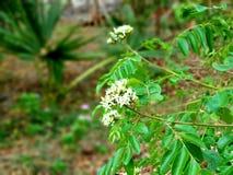 Mijn Tuin Groene bomen stock foto