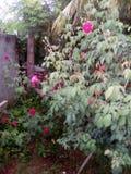 Mijn tuin is mooi Royalty-vrije Stock Afbeeldingen