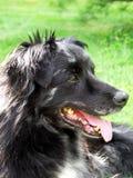 Mijn van een hond Royalty-vrije Stock Foto's
