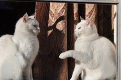 Mijn venstervensterbank Royalty-vrije Stock Foto